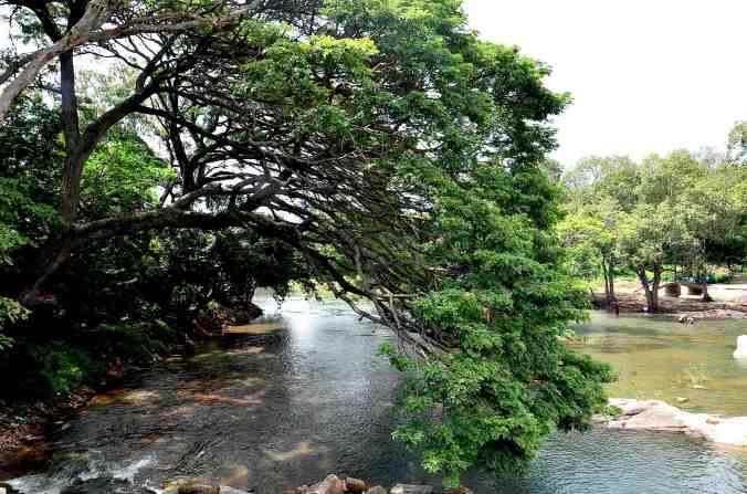 fiume albero della pioggia