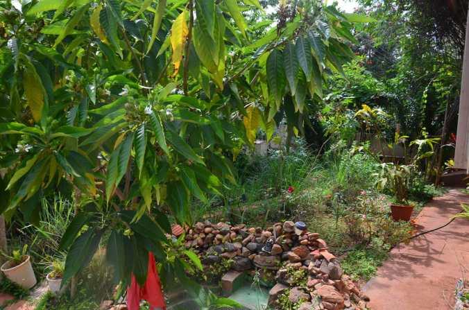 dixit healt clinic garden