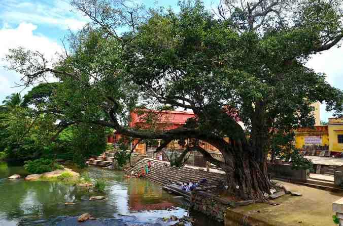 fiume albero della pioggia2
