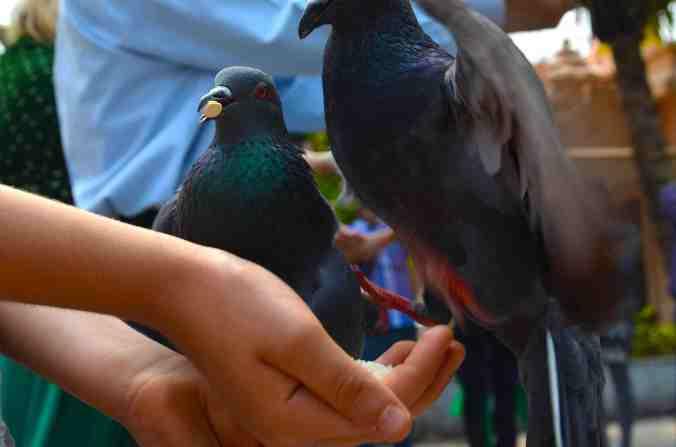 rel ines 2 piccioni