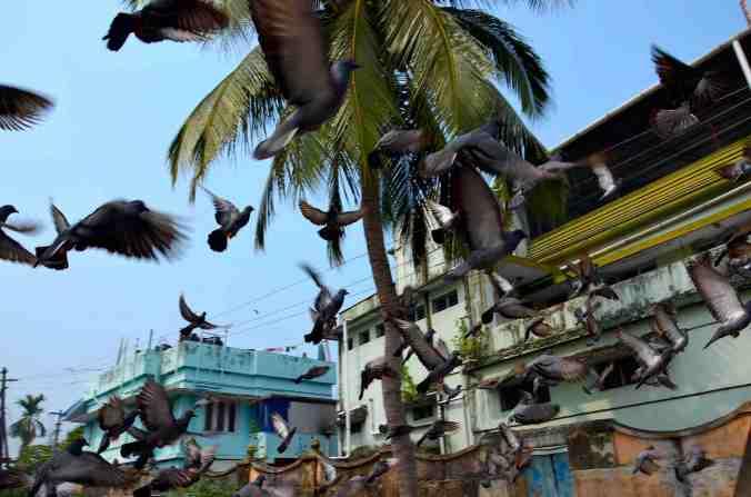 rel piccioni fine