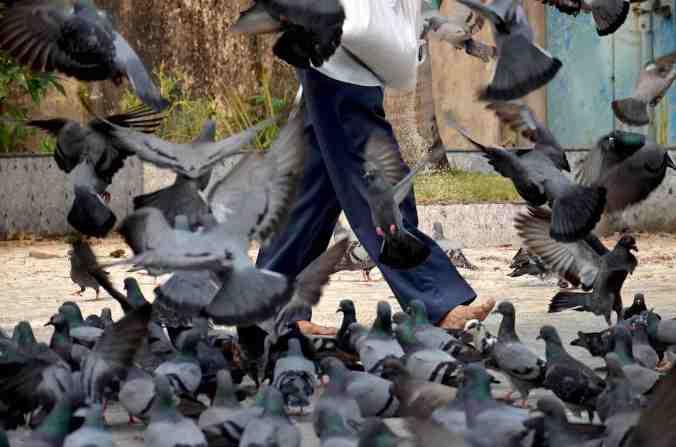 rel piccioni volo gambe