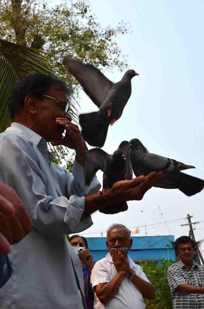 rel preghiera piccione
