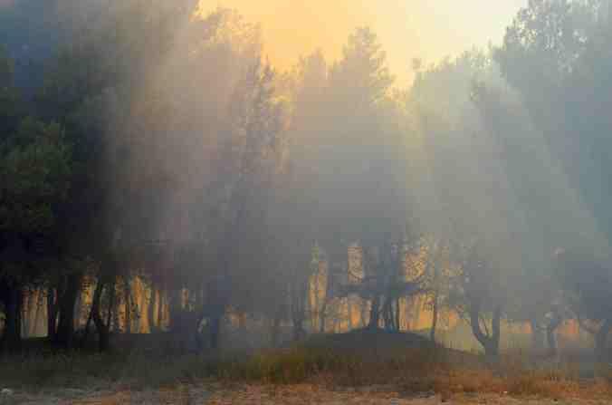 incendio pineta raggi